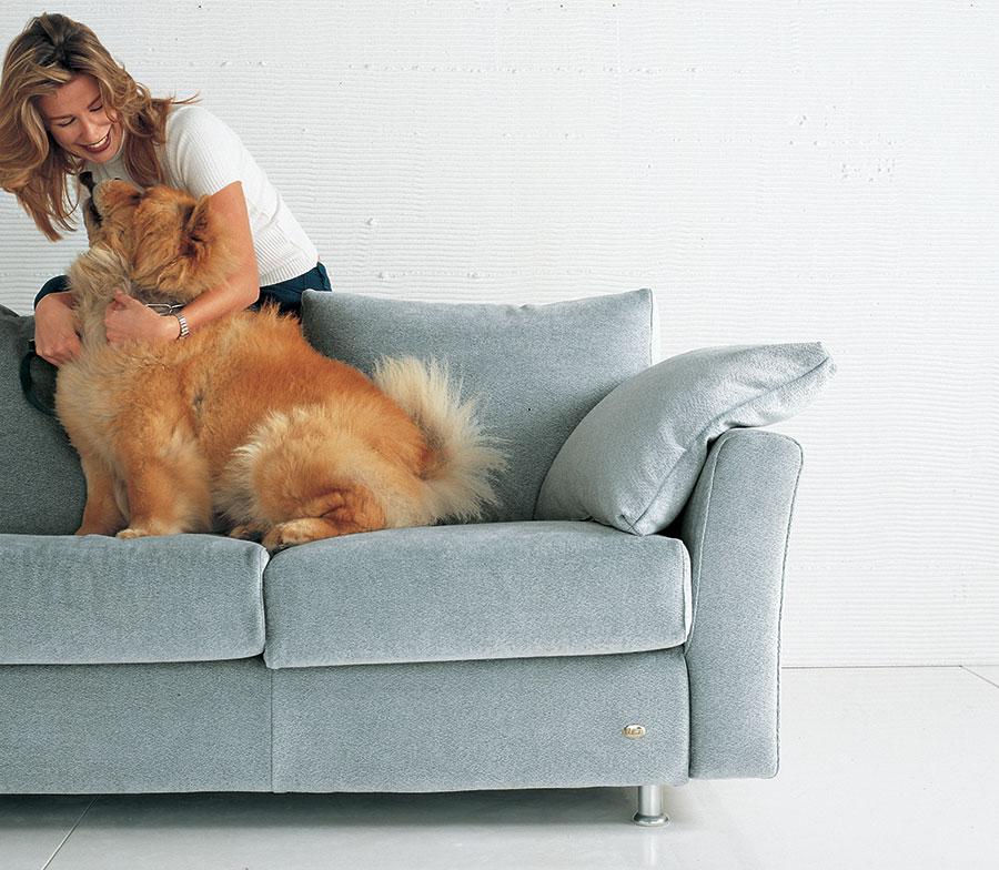 cane seduto sul divano.